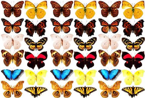 Печать на вафельной бумаге, Набор Бабочки 6