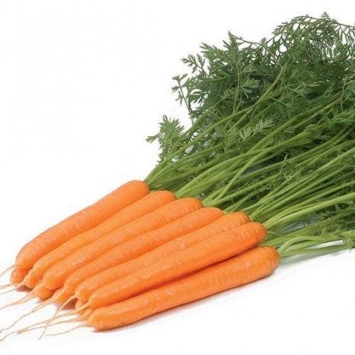 Нантский Рига рз F1 семена моркови нантской (Rijk Zwaan / Райк Цваан) РИГА.jpg