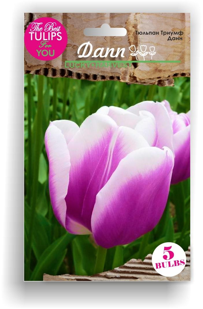 Тюльпан Триумф Dann (Данн) Украина 5 шт (Мелкая луковица)