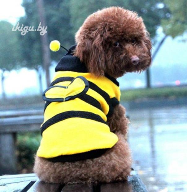 """Кигуруми для животных Кигуруми д/животных """"Пчелка"""" for-dog_bee.jpg"""