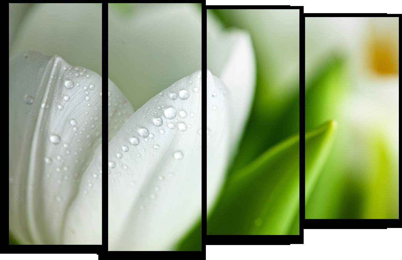 """Цветы Модульная картина """"Роса на лепестках"""" М529.png"""