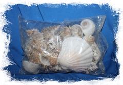 Набор из морских ракушек для декора и дизайна