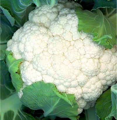 Цветная Опаал семена капусты цветной (Rijk Zwaan / Райк Цваан) ОПААЛ.jpg