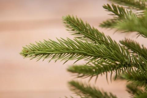 Искусственная елка Чемберлен 60 см в мешочке зеленая