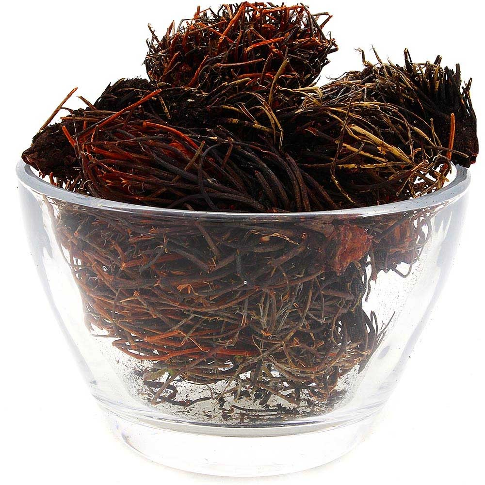 Травы Красная щетка rhodiola-quadrifida-1.jpg
