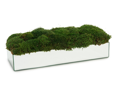 Mirrors and Moss