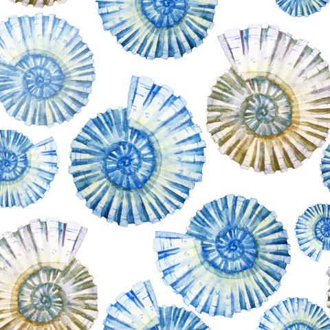 Голубой наутилус