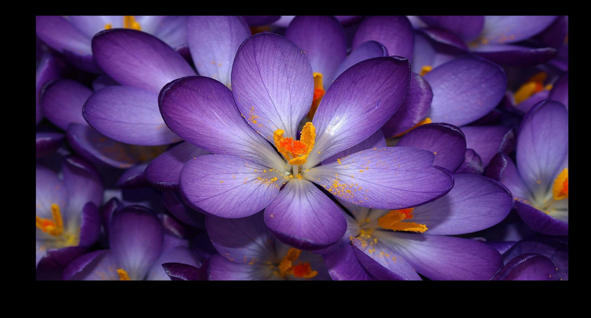 """Цветы Постер """"Сиреневые цветы"""" п291.png"""