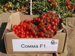 Сомма F1 семена томата процессингового (Nunhems / Нюнемс)