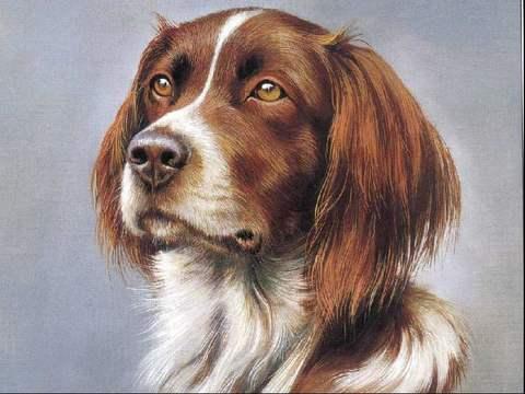 Алмазная Мозаика 30x40 Портрет собаки (арт. S2733)