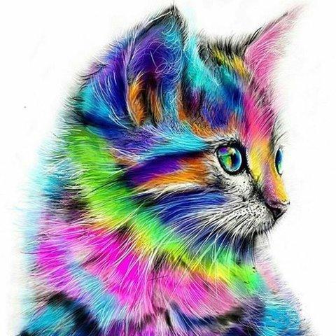 Картина раскраска по номерам 30x40 Разноцветный котенок