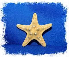 Морская звезда 2,5-5см