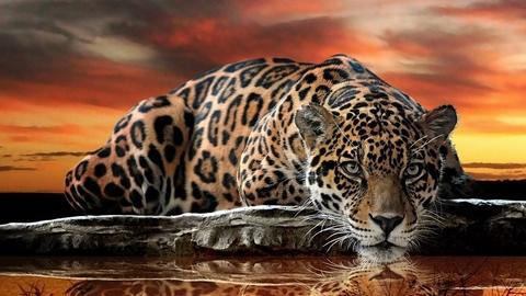 Алмазная Мозаика 20x30 Тигрица выслеживает добычу