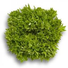 Эксайт семена салата хрустящего с сильно рассеченным листом (Rijk Zwaan / Райк Цваан)