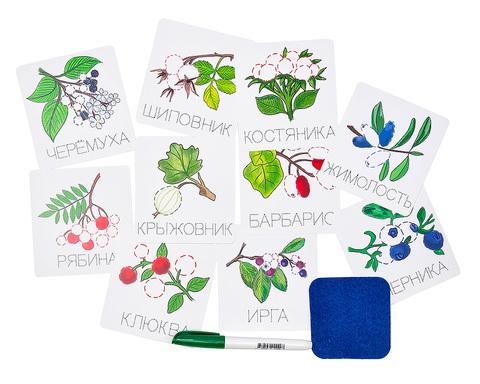 Карточки-прописи Ягоды, Smile decor Ф902