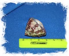 Трохус радиатус (Trochus Radiatus)