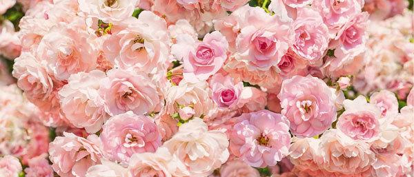 Водорастворимая бумага Модульные розовые розы