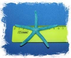 Синяя морская звезда Фингер 7-10 см.