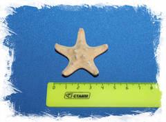 Сувенир морская звезда на магните