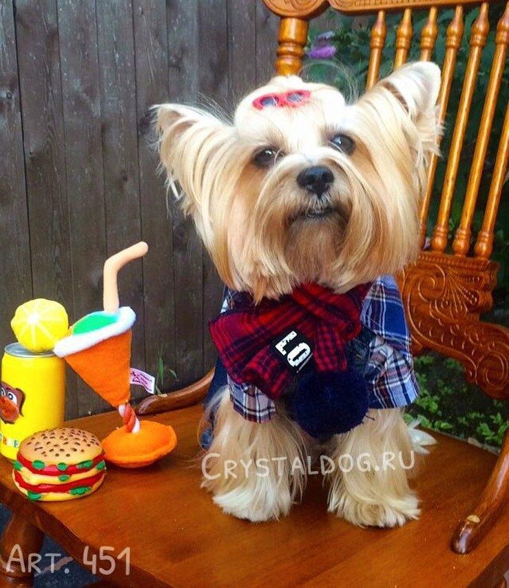 шарфы для йорков