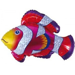 F Рыбка-Клоун, 34