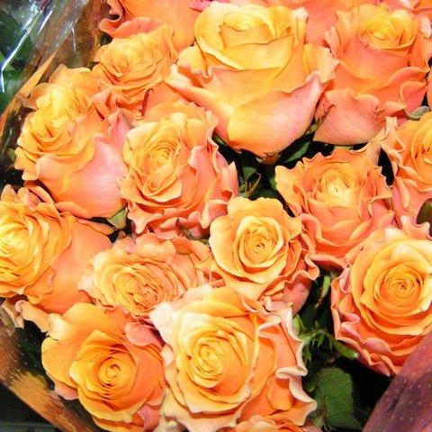 Роза чайно-гибридная Карпе Дием