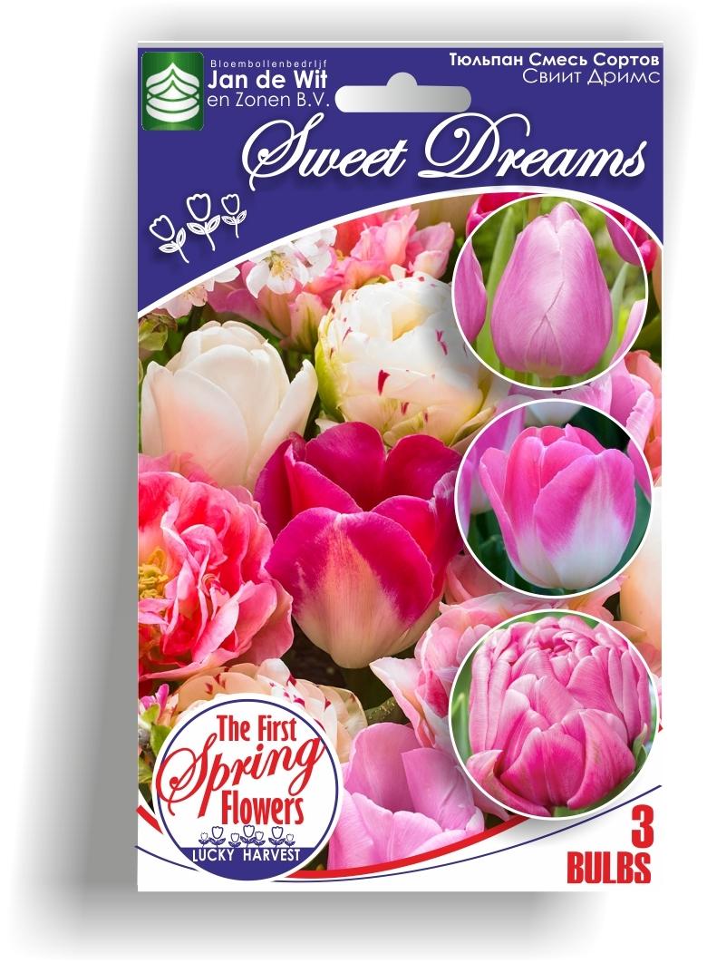 Тюльпан     Смесь сортов     Sweet  Dreams  (  Свиит Дримс)  3 шт.  Jan de Wit en Zonen B.V. Нидерланды