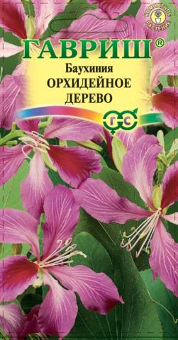 Баухиния пурпурная орхидейное дерево Гавриш 3шт