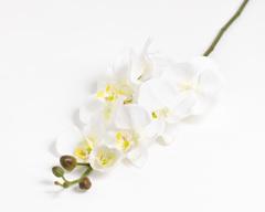 Ветка орхидеи.