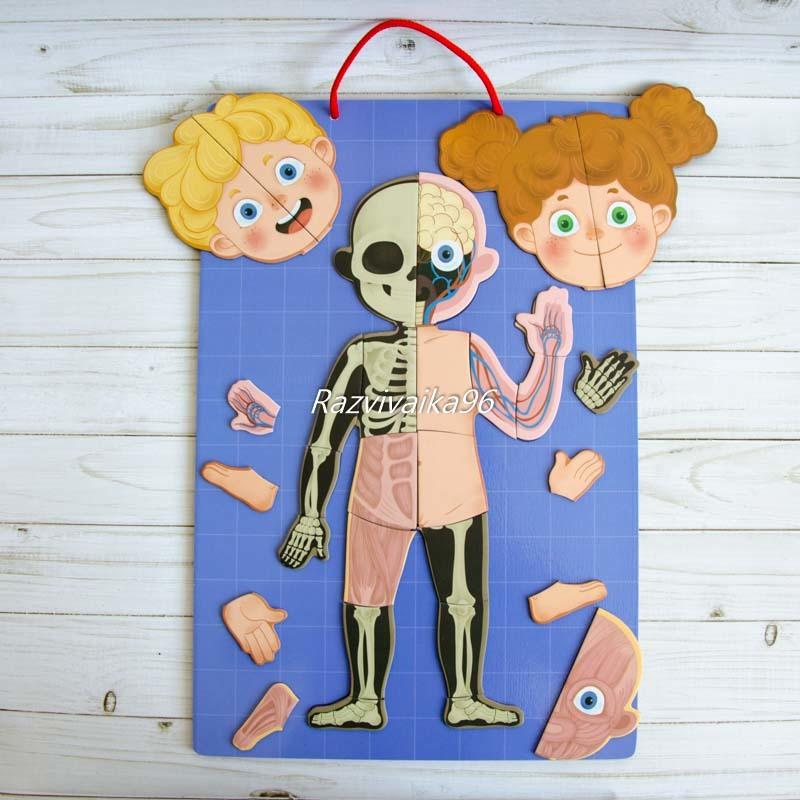 Магнитная анатомия человека купить накладной воротник на платье в интернет магазине