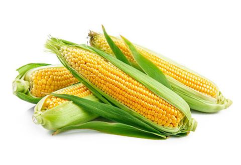 Кукуруза Свежая в початках, 1 шт