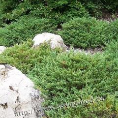 mozhzhevelnik-Andorra-Compact-04
