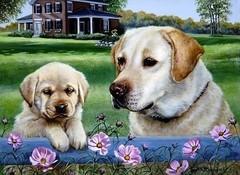 Картина раскраска по номерам 30x40 Собачья семья у дома