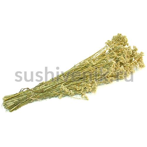 Травяной веник