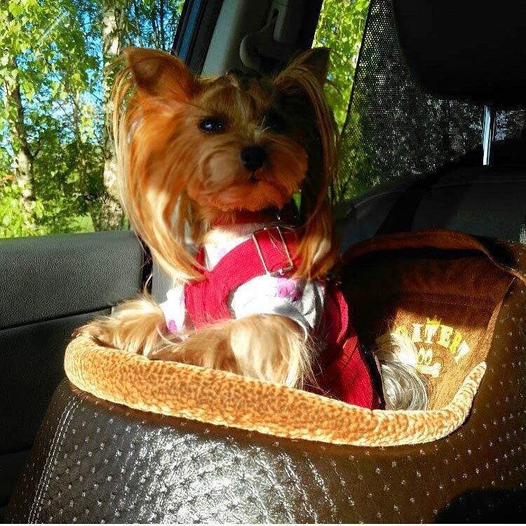 Автокресло для собак мелких пород