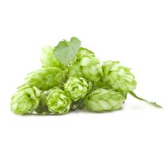 Хмель 47 hops - Fuggle, альфа 3,2% 50 грамм
