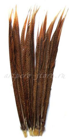 Перо фазана ,  длина ок. 60-65 см.