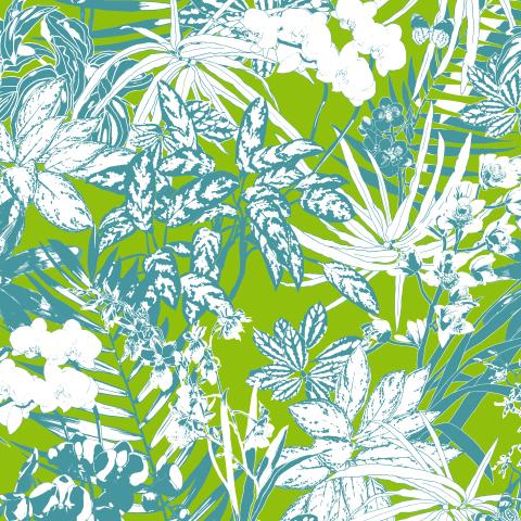 тропические растения и орхидеи_лайм
