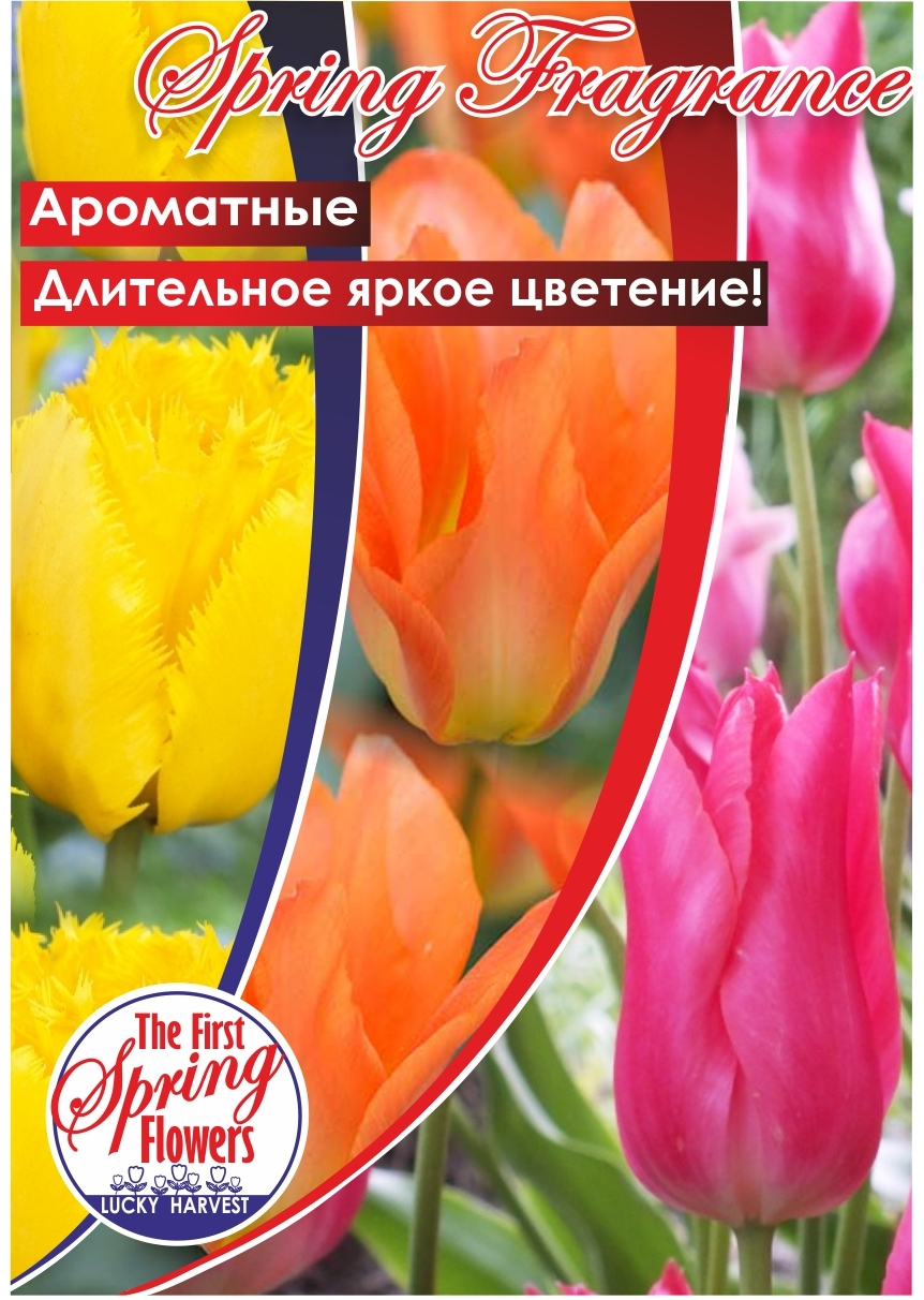 Тюльпан   Смесь Сортов  Spring Fragrance  ( Спринг Фрейджренс) 3 шт.  Jan de Wit en Zonen B.V. Нидерланды