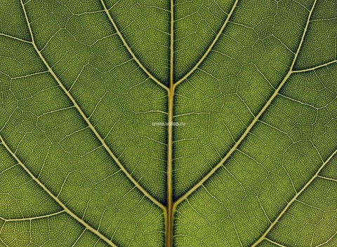 Фотообои (панно) Mr. Perswall Urban Nature P031501-8, интернет магазин Волео