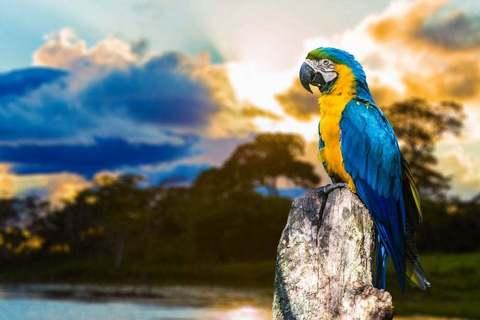 Картина раскраска по номерам 30x40 Попугай на камне