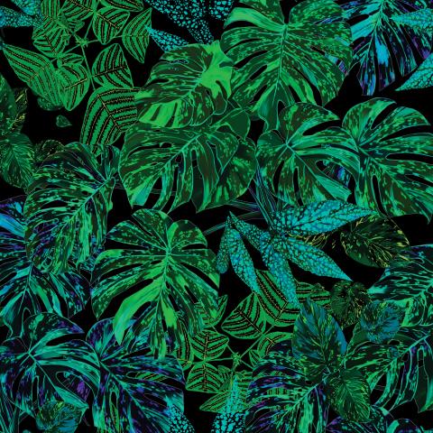 листья монстеры_ночная пандора