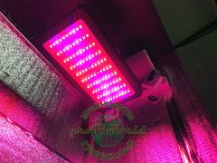 В150хД80хШ60 ГроуБокс 300W LED