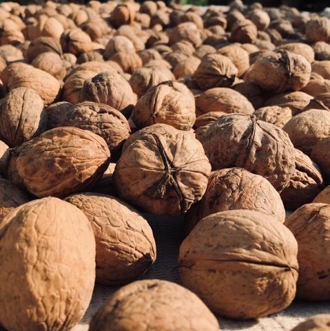 Фотография Грецкий орех в скорлупе /Краснодар/, 1 кг. /предзаказ/ купить в магазине Афлора