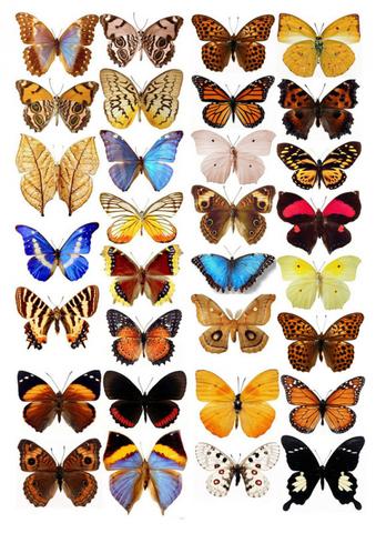 Печать на сахарной бумаге, Набор бабочек 1
