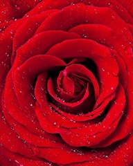Красная роза - Картина со стразами