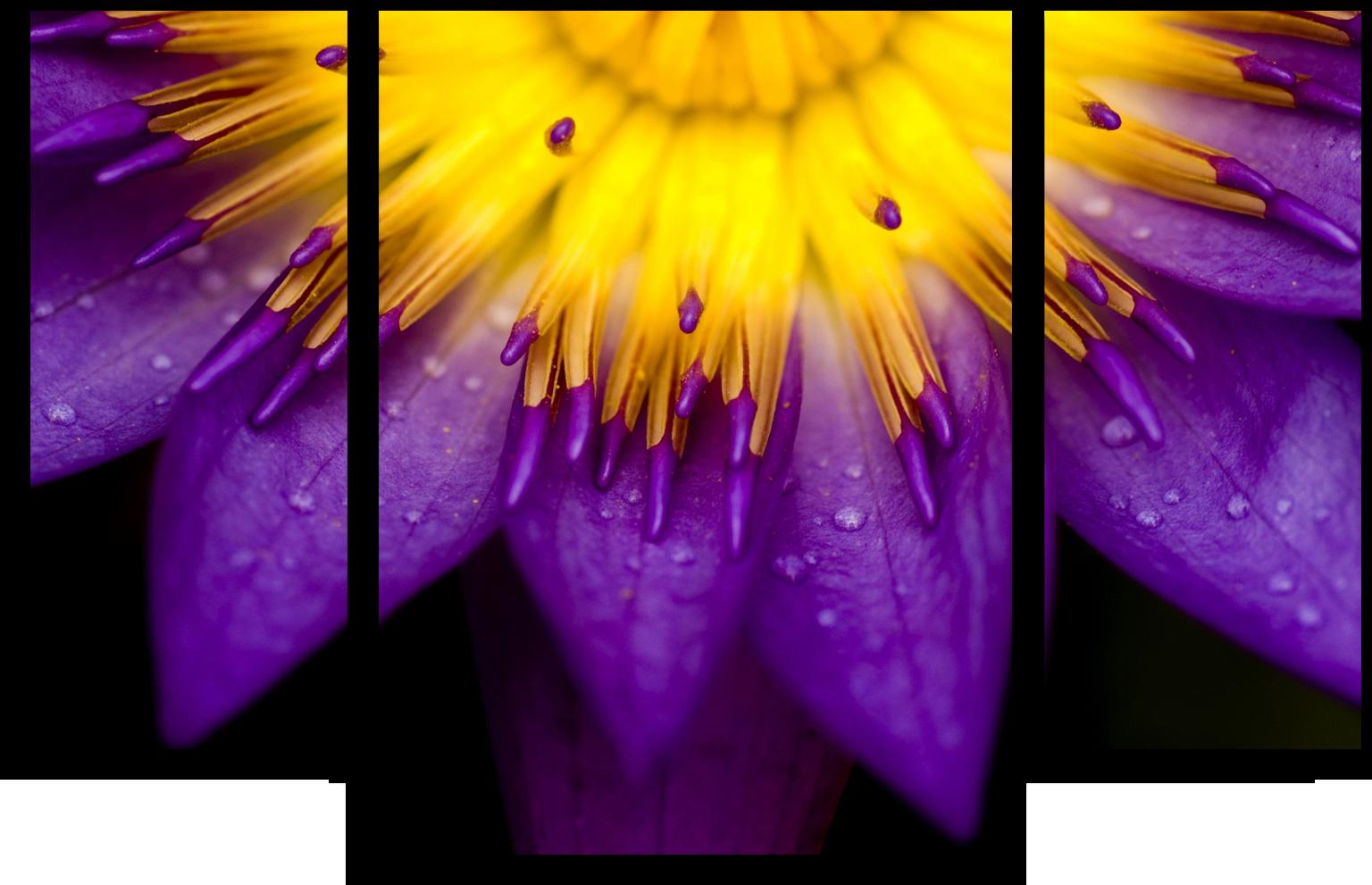"""Цветы Модульная картина """"Желто-фиолетовый цветок"""" М521.png"""