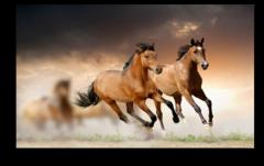 """Постер """"Бегущие лошади"""""""