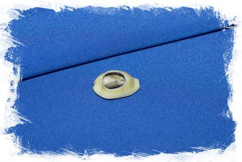 Срез ракушки Ципрея Монета для украшений