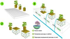 Как выращивать в минеральной вате